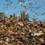 birds and food waste